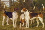 1304457005_oakley-fox-hounds_www_nevsepic_com_ua