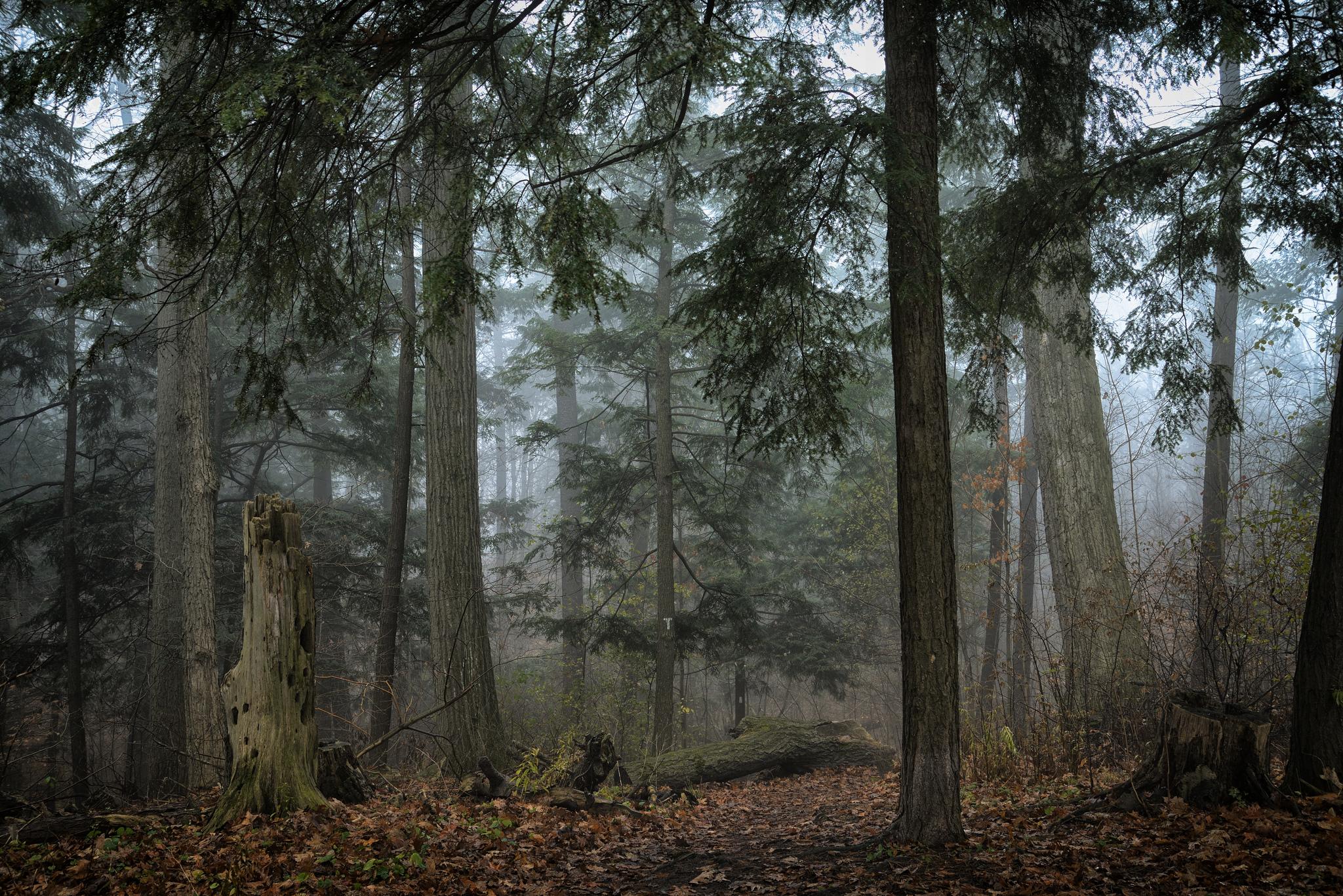 545997_trees_fog_homer_watson_park_kitchener_ontario_cana_2048x1367_(www_GdeFon_ru).jpg
