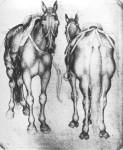 Horses-vi