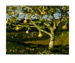 gourd-tree-i9