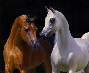 prod_Egyptian-Stallions_lg